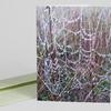 Jeweled Web