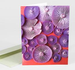 Mushroom Medley Amethysts