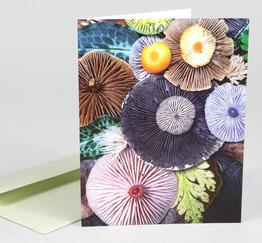 Mushroom Medley Forest Floor