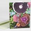 Mushroom Medley Succulents
