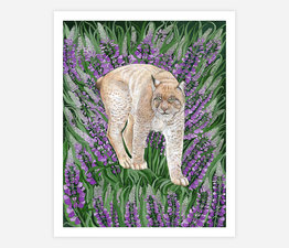 Lynx with Purple Lupine