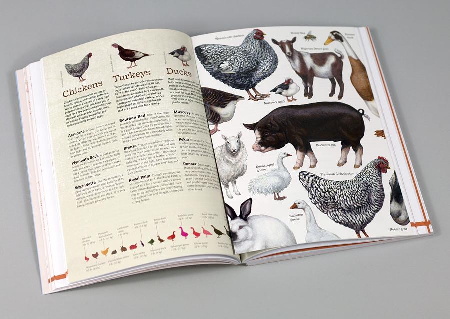 Backyard Farming Animals : Damerow  The Backyard Guide to Raising Farm Animals at buyolympiacom