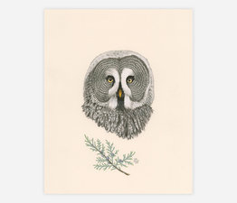 Great Grey Owl / Grey Owl Juniper