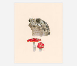 Toad / Toadstool
