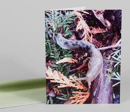 Slugforest