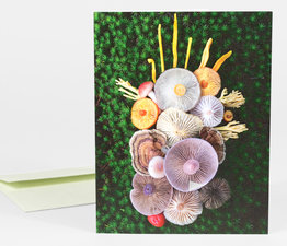 Mushroom Medley with Turkeytails