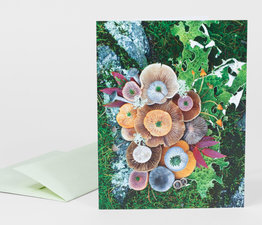 Mushroom Medley with Seabluff