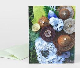 Mushroom Medley with Barnacles