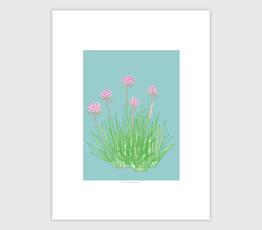 Pink Sea Thrift