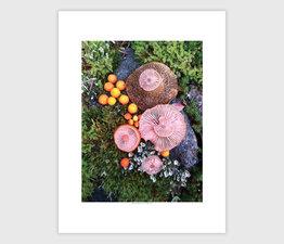 Mushroom Medley in Moss