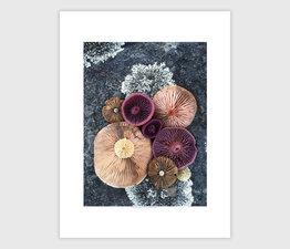 Mushroom Medley on Lichen Rock