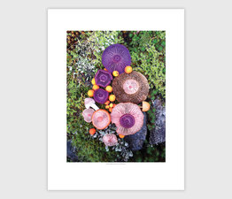 Mushroom Medley Purple on Green