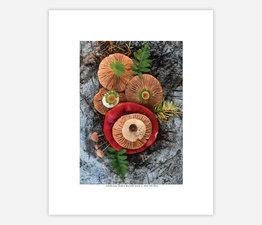 Mushroom Medley Russula Stack