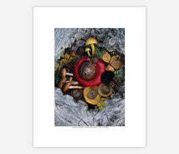 Mushroom Medley with Snail Shell