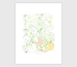 Garden Pumkin, Melon & Squash