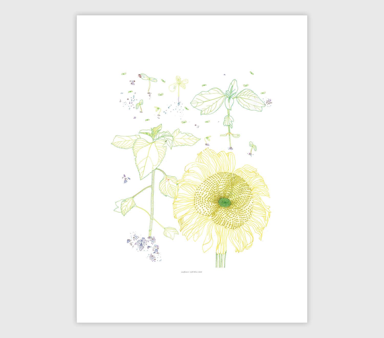 Jill Bliss. Garden Sunflower