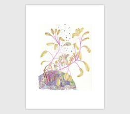 Garden Tricolor Sage