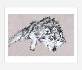 Daisy Wolf