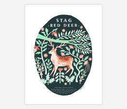 Stag Red Deer