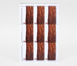Sequoia Standing