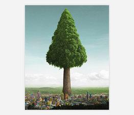 Big Ole Tree