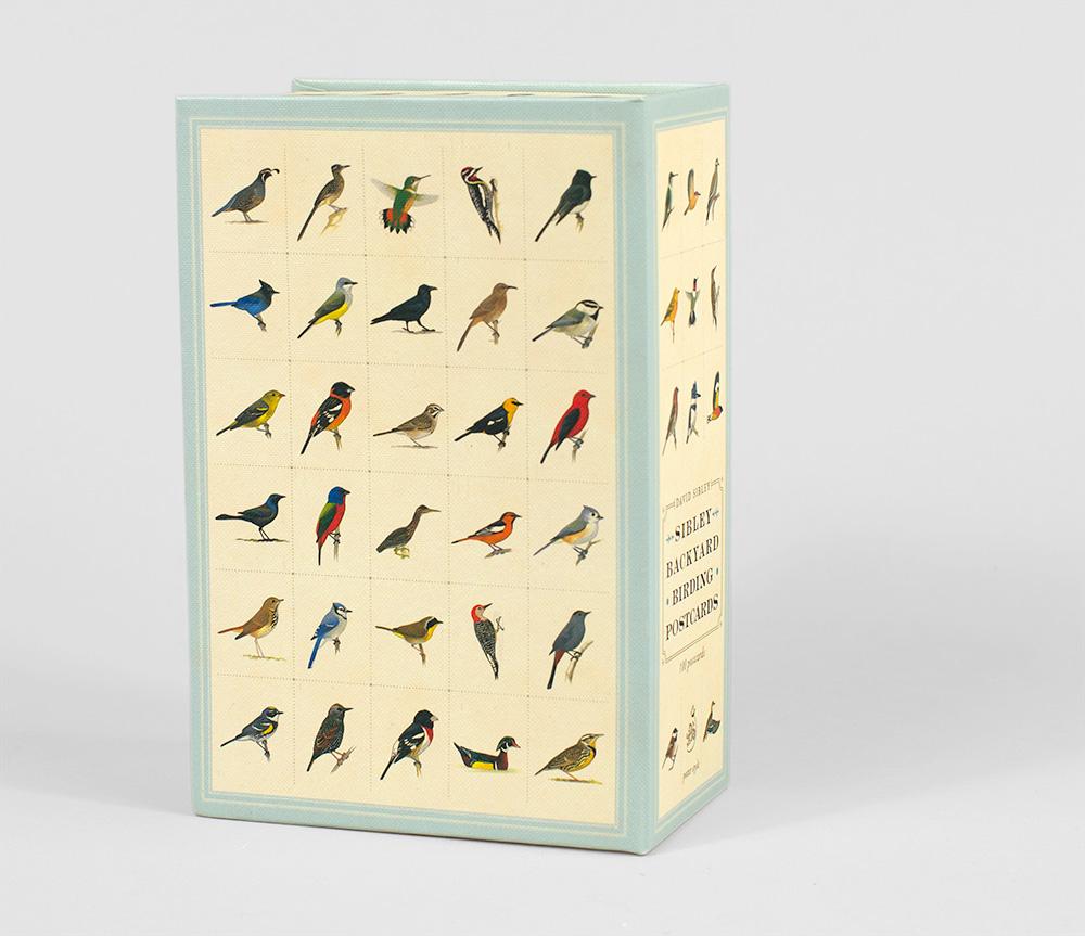 david sibley sibley backyard birding postcards at buyolympia com