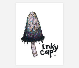 Inky Cap